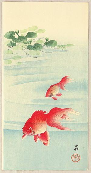goldfishkoson